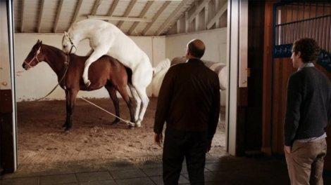 horse-porn-silicon-valley-thumb-600x338-155048.jpg